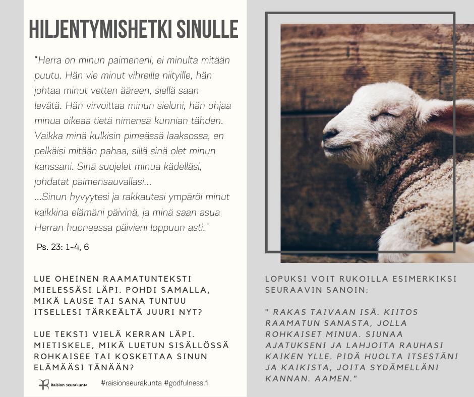 Valkoinen lammas ruskealautaisessa karsinassa.