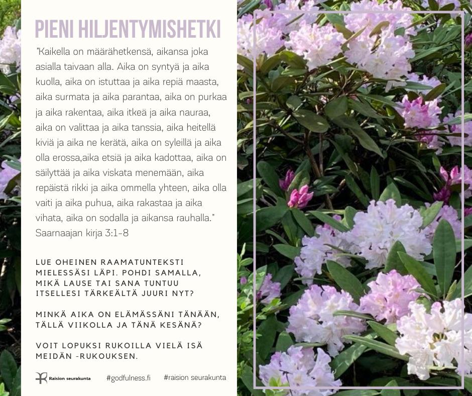 Valkeat ja hennon violetit kukat alppiruusupensaassa.