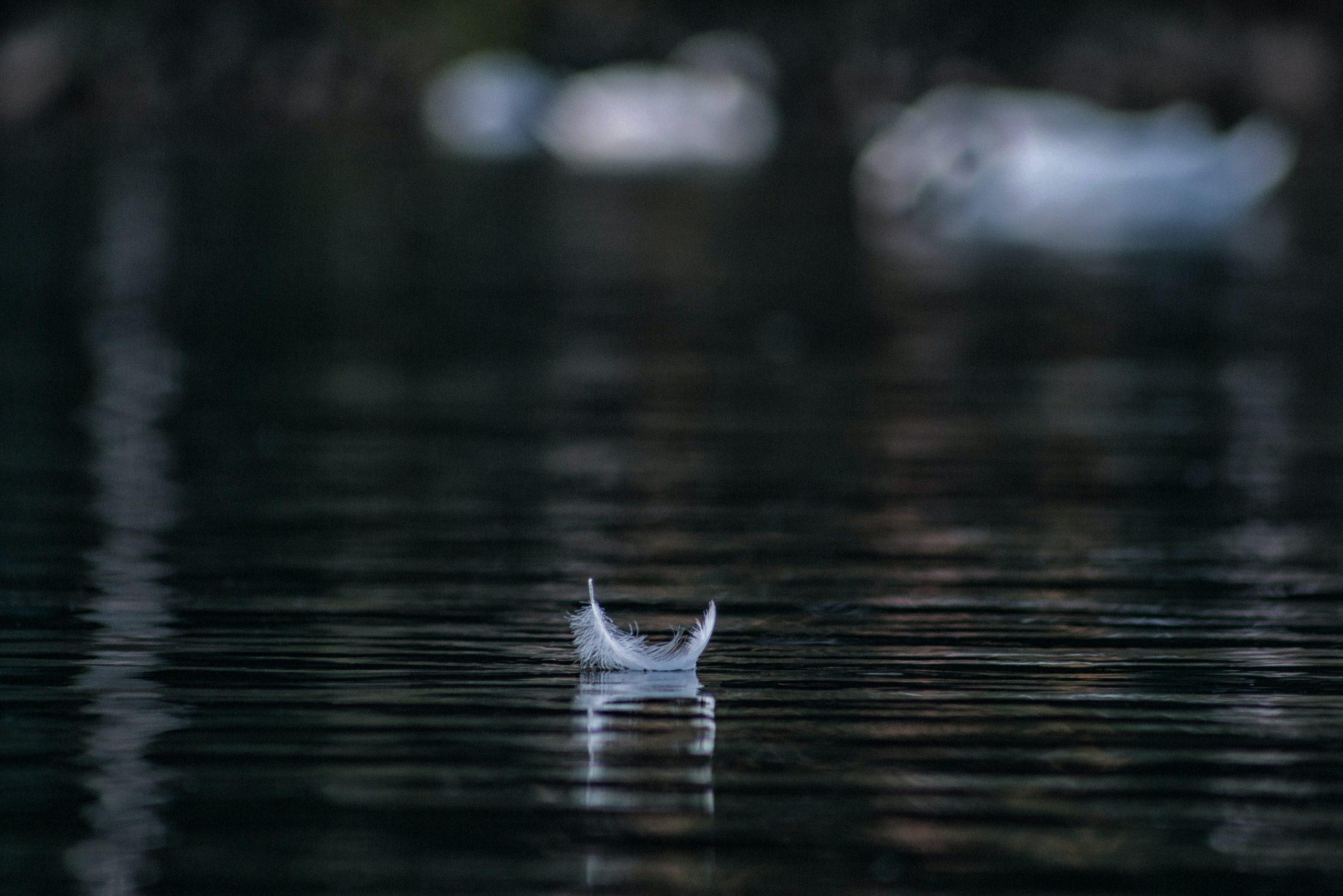 Valkoinen höyhen kelluu veden pinnalla.